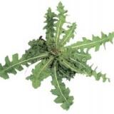 Сорняки и гербициды