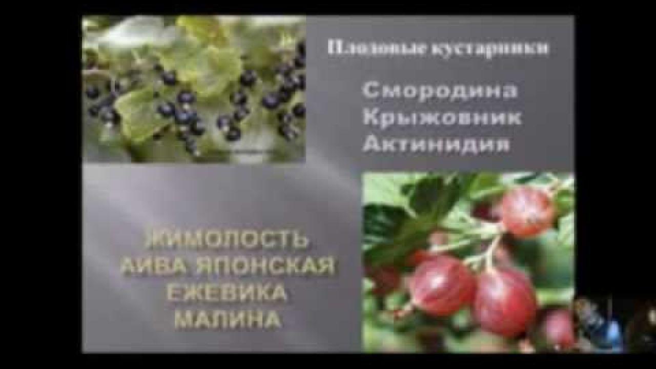 Плодовые деревья и ягодные кустарники