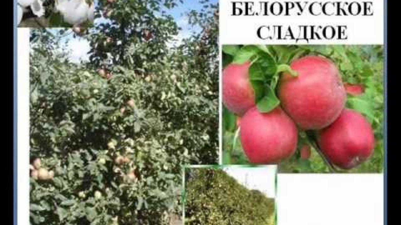 Технология яблоневого сада от А до Я