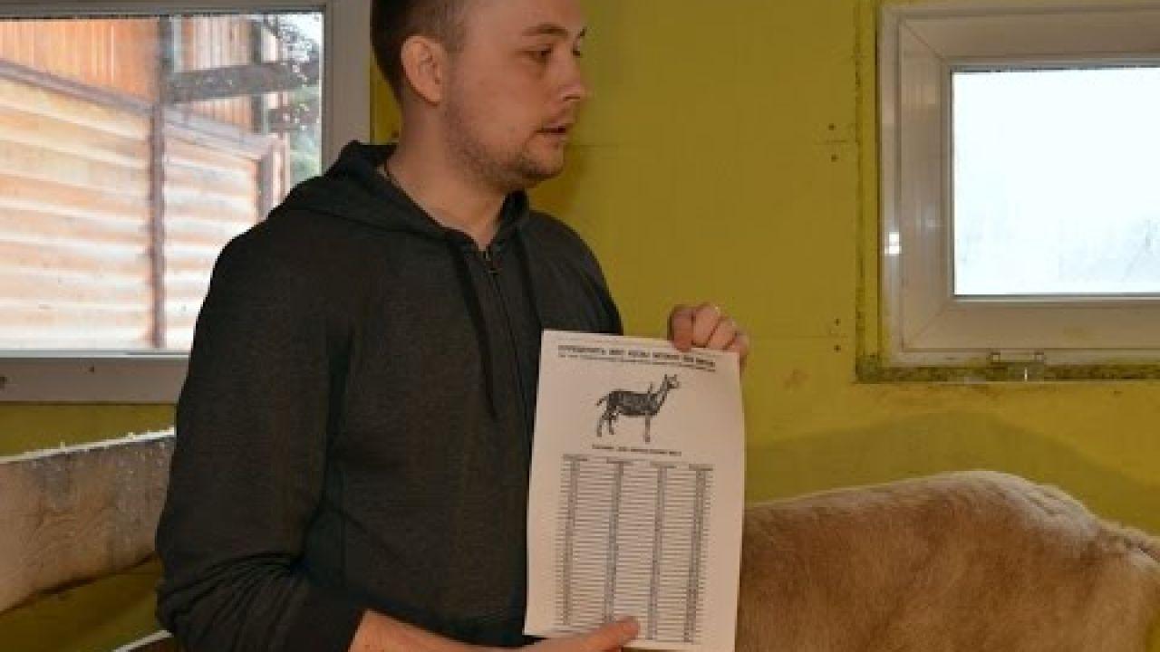 Советы начинающим, как выбрать козу.