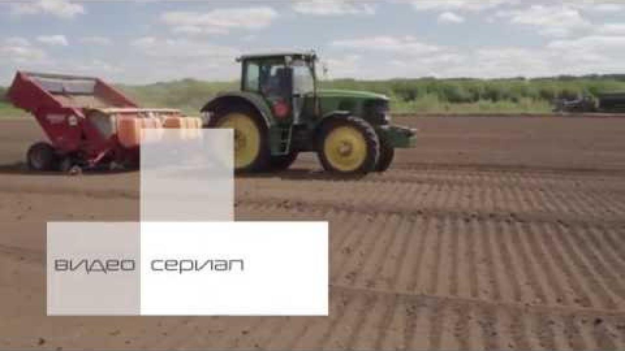 Защита картофеля от заболеваний в ранние сроки