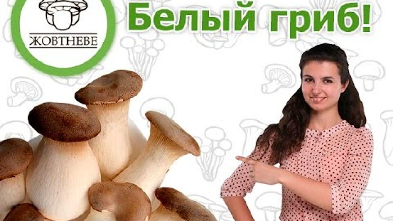 Выращивание белого степного гриба