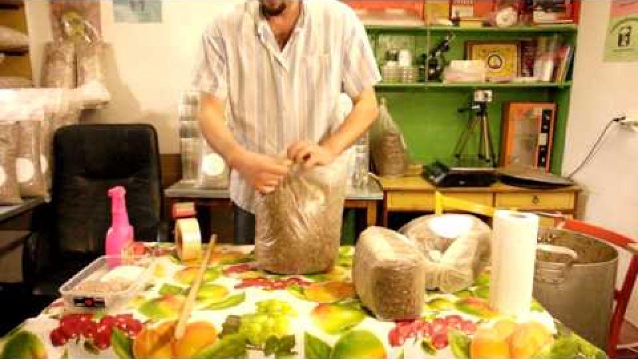 Шиитаке - изготовление грибных блоков по стерильной технологии