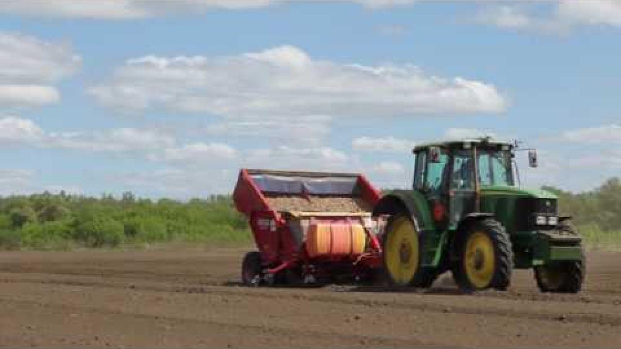 Подготовка почвы, выбор сорта, схема посадки картофеля и протравливание