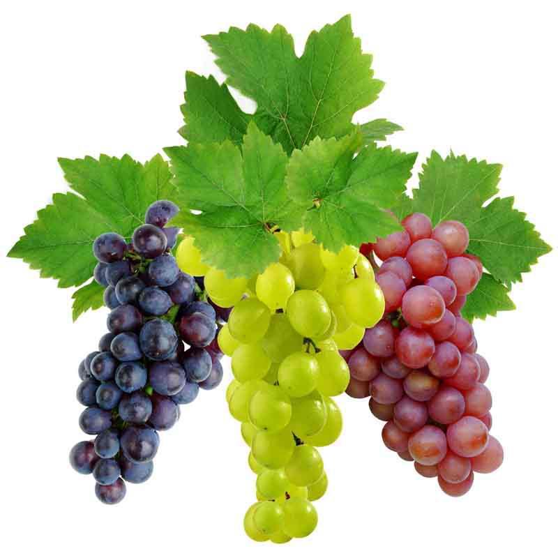vinograd_kyltyrnii